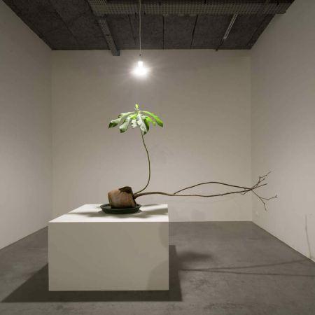 Michel Blazy plante